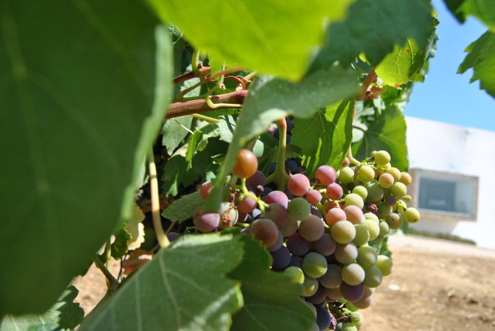 """Os """"melhores vinhos do Alentejo"""""""