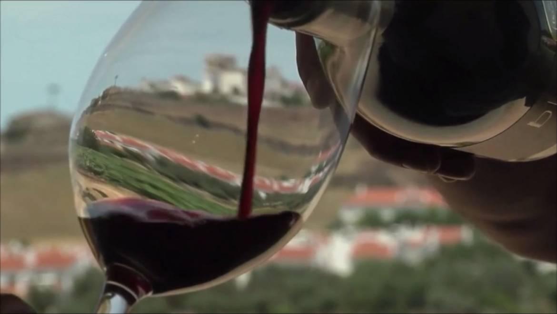 Tiago Cabaço Wines